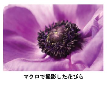 マクロで撮影した花びら